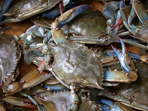 Outer Banks Blue Crabs from Ten O Six Beach Road Bistro